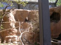 Albuquerque, NM Zoo