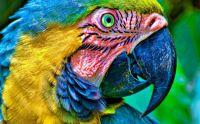 ParrotWallpapers-3
