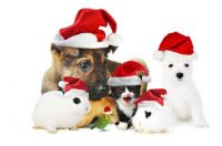 christmas-dog-cat-rabbit