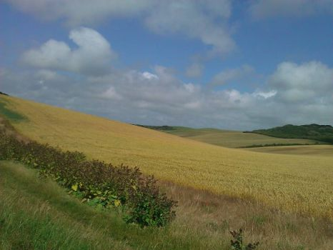 fields of peacehaven