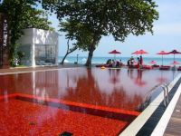 San Alfonso del Mar Resort Pool (Medium)