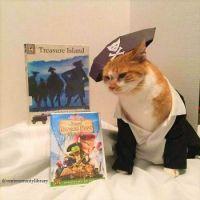 Cat Icon Game #49 - please identify!