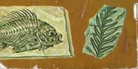 Prehistoric Creatures Fossil Fish & Fern From Fossils Golden Nature Guide