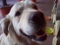 ARNON - BEST DOG EVER ! RIP MY TRULY FRIEND ! MOURN U TILL I JOIN U !