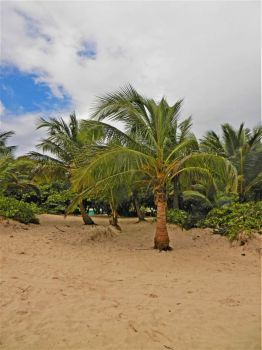 sandy shores with coconut trees, 2015 Caribbean trip