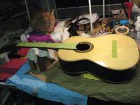 Papaya and guitar in progress - 2015