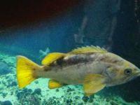 Vancouver Aquarium 3
