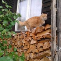 Max checks the supply of wood for the winter