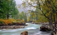 river_mountain_trees_stream_