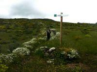 The daisy path Gran Canaria
