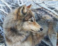 Wolf by Bonnie Marris