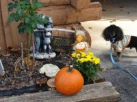 a handsome little man and his pumpkin