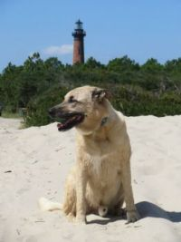 Chip and the Currituck Lighthouse