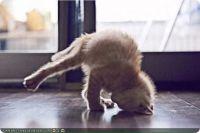 cute-kitty-kitten-yoga-master-r-default