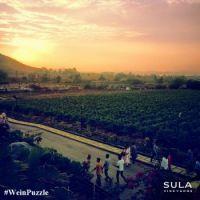 #WeinPuzzle - Sula vineyards (12)