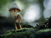 interesting-mushroom-photography-771__880.jpg mushrooms with snail