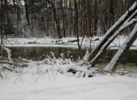 Snow shoeing along the creek.