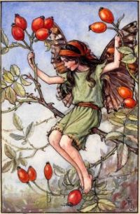 The Rose Hip Fairy