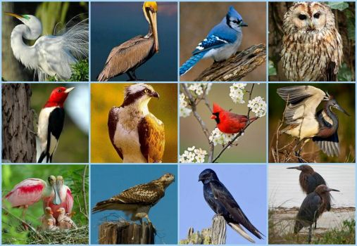 Theme: Birds that are common to my area - larger