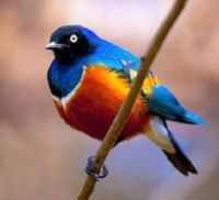 Exotic and Beautiful Birds - 5