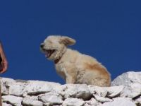 Puppy in Greece!