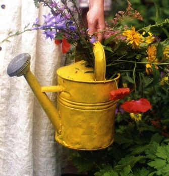 Watering can and garden
