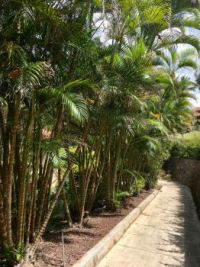 Walkway in Hawaii