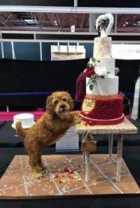 Once a nice Wedding Cake.