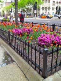 flower bed on Chicago street