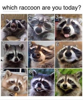 which raccoon