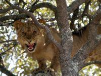 lions-johns