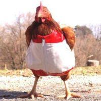 Funny-Chicken-In-Dress