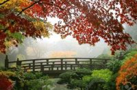 Misty-fall-morning-in-Portland-s-Japanese-Gardens