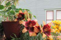 june flowers 6 (2)