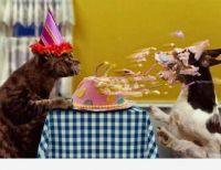 HAPPY BIRTHDAY MISCHKA (FIONA)