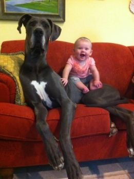 This dog who takes babysitting too seriously