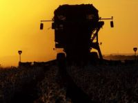 Cotton Picker at Sunset