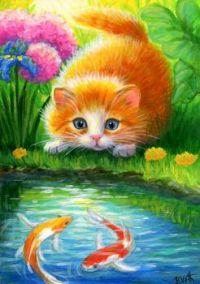 Kitten and koi fish