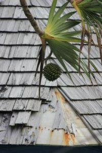 plant on Reunion