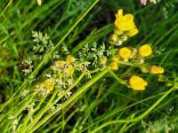 look differently: grass in bloom