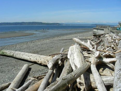 Driftwood, West Seattle beach
