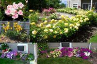 Mom Gardens 2