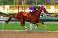 California Chrome 2014 Derby Favorite