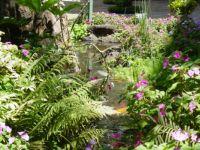 Fish and Flowers - Maui, Hi