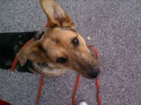 MELODY-TARA'SHOUSE ADOPTABLE DOG