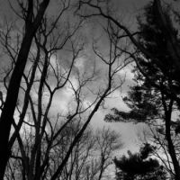 Trees Before Storm