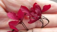 Tiny Japanese  Maple leaves