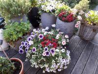 My daughter's flowery terrace