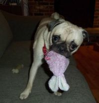Vicious Puppy