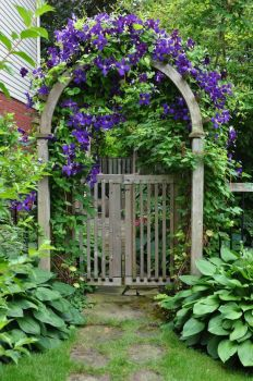 I'm loving this old gate and clematis!